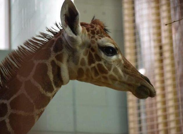 Calgary Zoo Announces Birth Of Baby