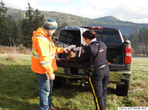 Young Deer Rescued After Falling Through Frozen Pond In Duncan,