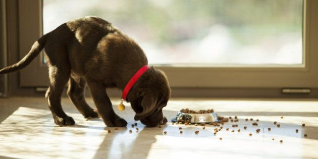 Top Tips on Keeping Your Cat or Dog
