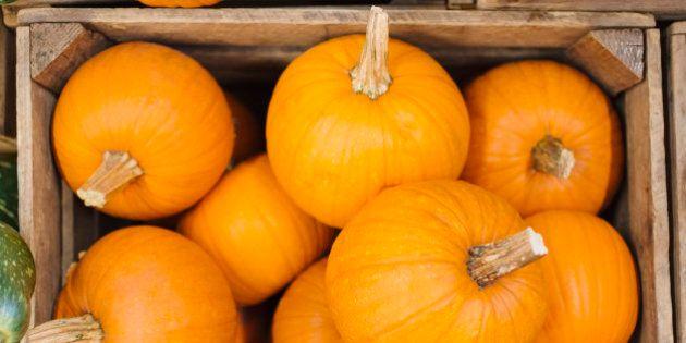 Pumpkins in