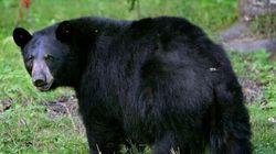 Announcing International Bear