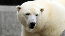 These Zoo Polar Bears Are Literally Sh*tting