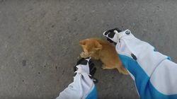 Motorcyclist Saves Kitten From Near-Death