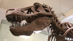 New Theory Makes T. Rexes A Bit Less