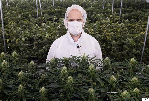 Medical Marijuana Kosher? Doesn't Matter, Says Kashruth Council of