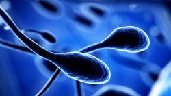 From Stem Cells To Egg And