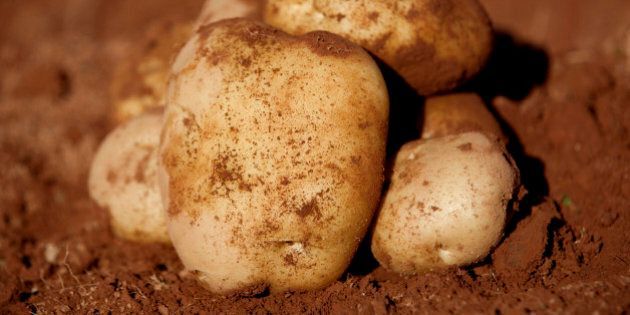 Cavendish Farms Finds More Potatoes With Sewing