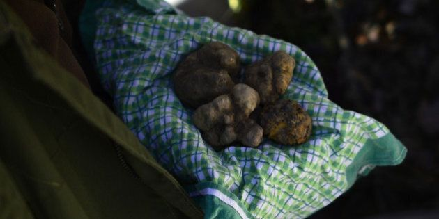 Ezio, 67, truffle's hunter for 50 years, shows truffles found by his dog, Jolli, on November 25, 2013...