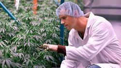 Canada's Marijuana Lobby Group Gets A