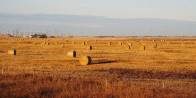 In this Oct. 19, 2010 photo, hay bales sit in prairie wheat fields outside Saskatoon, Saskatchewan. Saskatchewan...