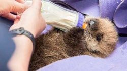 If You Know Of Something Cuter Than A Baby Otter, We'd Like To See