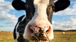 19 Years After Mad Cow, European Beef Returns To