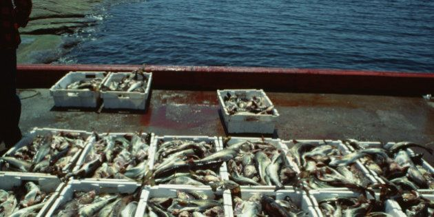 Baker: New Fish Science Report Paints Dizzying Picture For Industry
