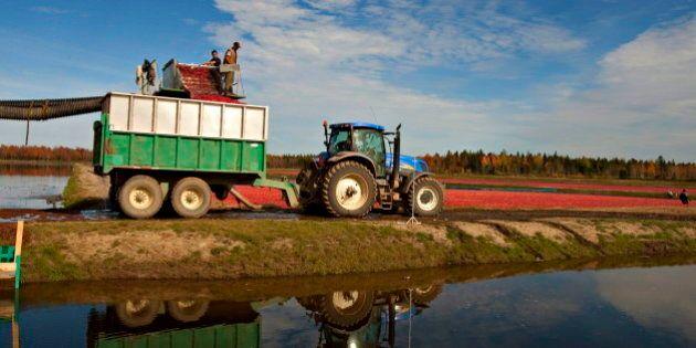 Temporary Foreign Worker Program Too Bureaucratic, Say Quebec