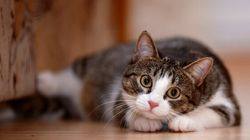 Vancouver's Cat Café Closed Temporarily Due To Lack Of..