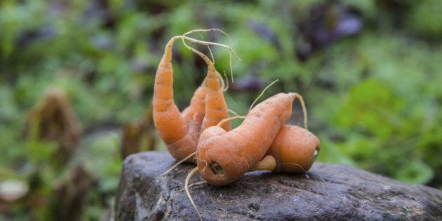 Three Ways to Turn Ugly Veggies into Attractive Menu