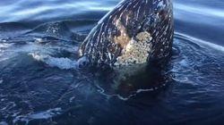 Humpbacks Pop Up Right Next To B.C. Fishing