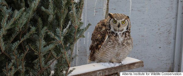 Alberta Wildlife Organization Asks For Donations Of Christmas