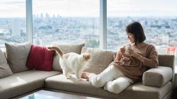 Apartment-Sharing Tips For New Cat