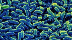 Salmonella Outbreak Sends 34 To