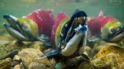 LOOK: Teen B.C. Photographer Swims With The
