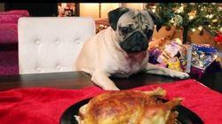 Doug The Pug Just Created Every Pet's Favourite Christmas
