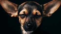 Pit Bull Kills Therapy Dog In