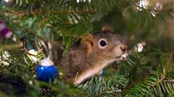 This Squirrel Is Squatting In A Couple's Christmas