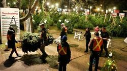 B.C. Christmas Tree Sales Foster Hope For 'Aged-Out'