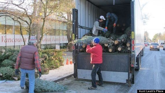 Vancouver-Area Christmas Tree Sales Foster Hope For 'Aged-Out'