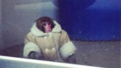 Ikea Monkey Back In