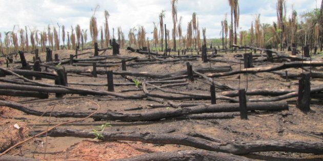 Latin Americans Are Paying the Price for Corporate Climate