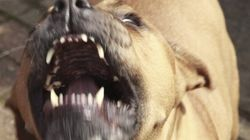 Woman Who Ordered Pitbulls To Attack Friend