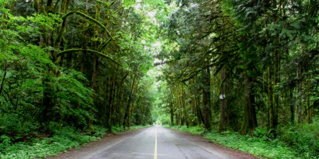 'Deep dark forest overhangs the road, with light in the