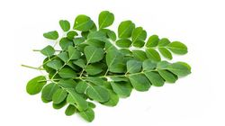 7 Reasons Why Moringa Is A Nutritional