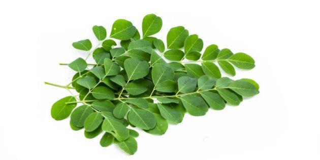 moringa oleifera leaves...