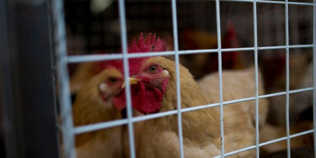 Chickens sit in a cage at the Shekou wet market in Shenzhen, China, on Thursday, Dec. 19, 2013. A Chinese...