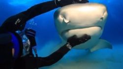 Cute Shark Encounter Proves They're Not As Scary As They