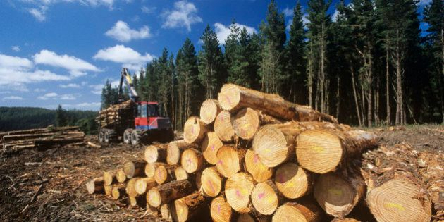Resolute Forest Job Cuts To Hit 300 At Newsprint