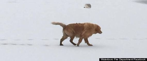 Waterboro Fire Department Rescues Golden Retriever From Frozen Lake