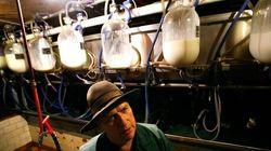 Ontario Raw Milk Farm Raided By Public Health