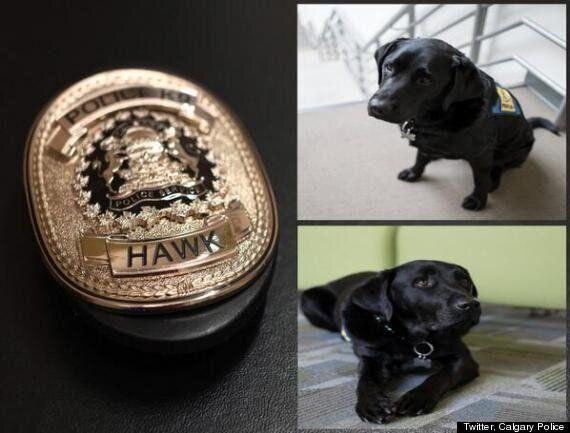 Hawk The Trauma Dog Comforts Children During Calgary Sex Abuse