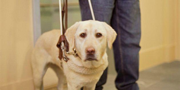 Calgary Service Dog Access Worst In