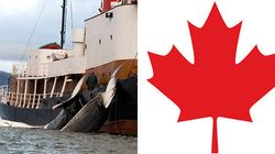 Government Under Fire For Allowing Trade In Endangered Whale