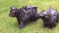 These Dinosaur-Dog Breeds Are Too Freaking