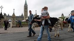 Ontario, Quebec Dairy Farmers In Ottawa To Express Trade Talk