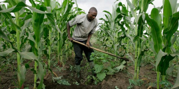 **ADVANCE FOR MONDAY, DEC. 10** A farmer prepare water channels in his maize field, Tuesday, July 17, 2007 in Ngiresi near the Tanzanian town of Arusha.  (AP Photo/Karel Prinsloo)