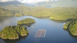 Ahousaht First Nation Warriors Win B.C. Salmon Farm