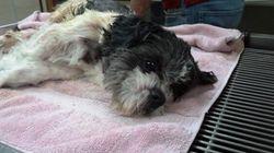 Tiny Dog Abandoned In Diaper Box Near