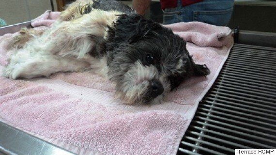 Dog Euthanized After Being Left In Diaper Box Near Kitimat,